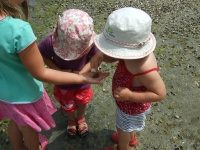 Finding crabs at the estuary