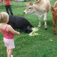 Feeding the animals again