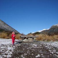 Poppy at the snow