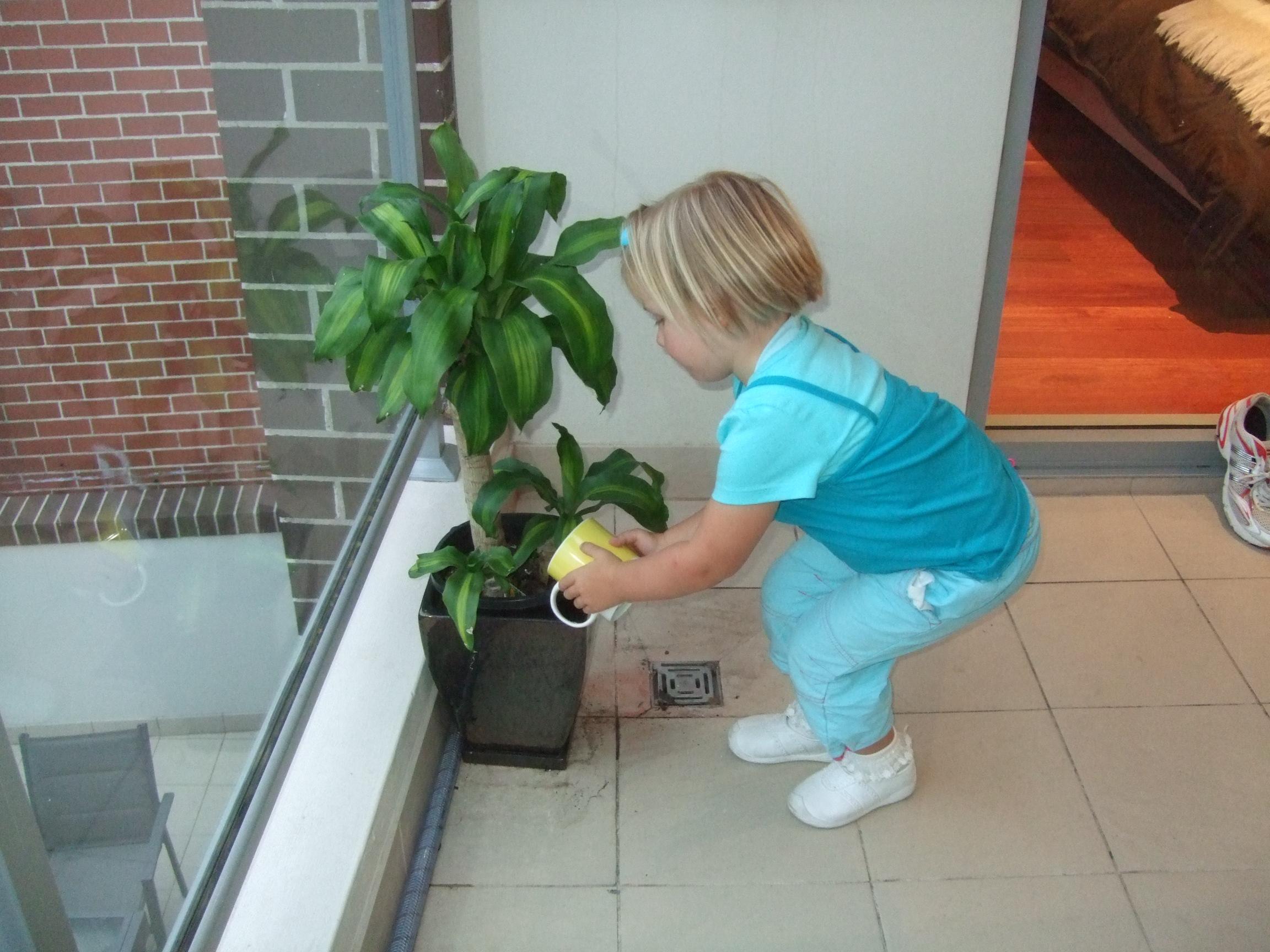 jonos-plant