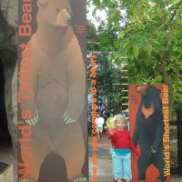 bear-measuring