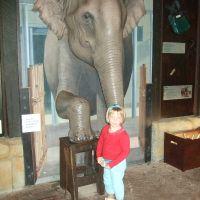 elephant-foot-care