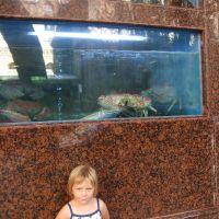 golden-moon-chinese-restaurant-giant-crabs