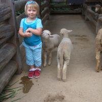 kids-zoo-lambs
