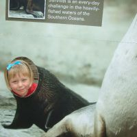 poppy-seal